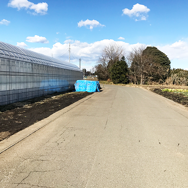 右左折したところの道です。左のビニールハウスが苺の時間です。