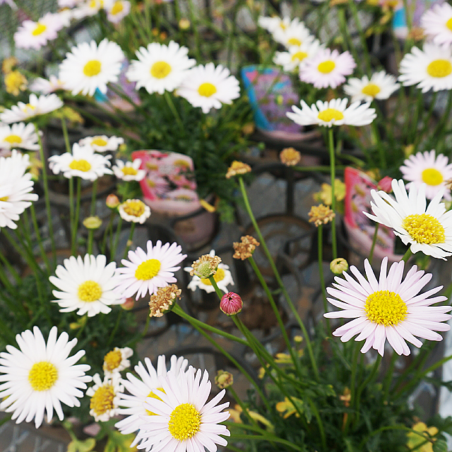 お花の時間ギャラリー11