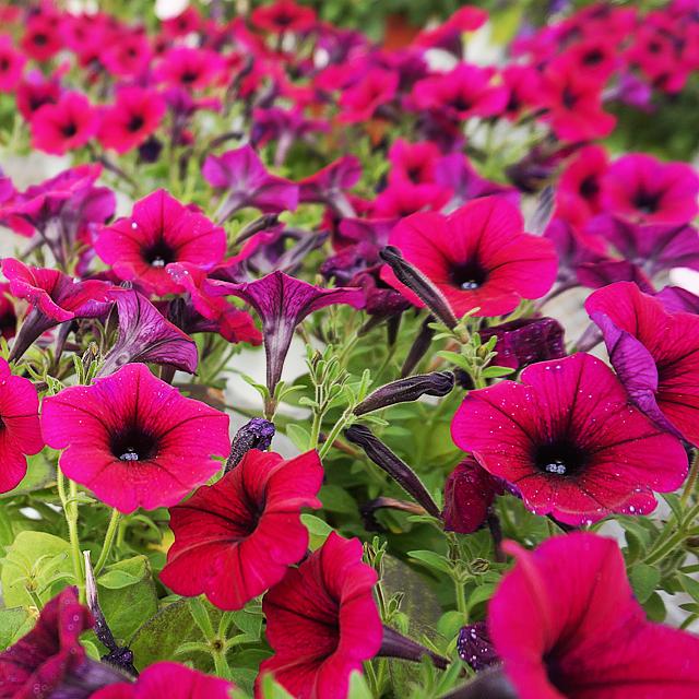 お花の時間ギャラリー14