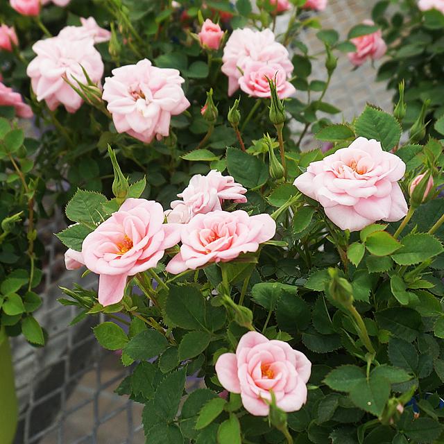 お花の時間ギャラリー17