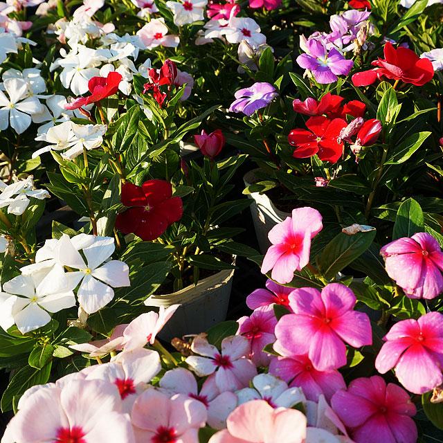 お花の時間ギャラリー05