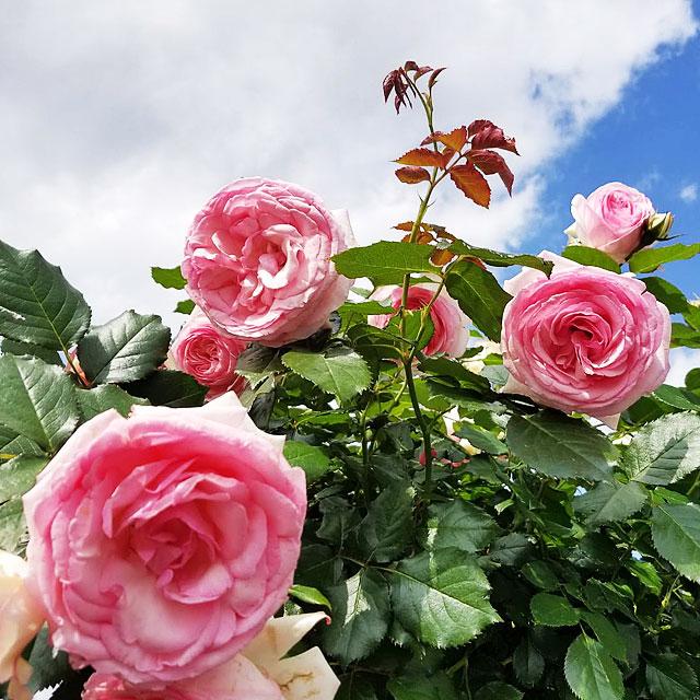 お花の時間ギャラリー22