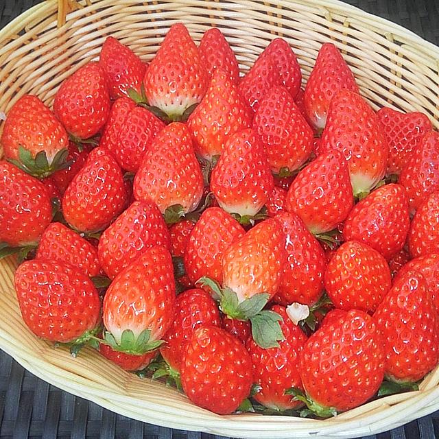 いちご狩り時間は30分(平日45分)間です。時間内で当園自慢のおいしい苺をたくさんご賞味ください(^_^)