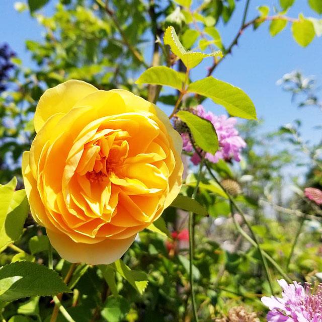 お花の時間ギャラリー24